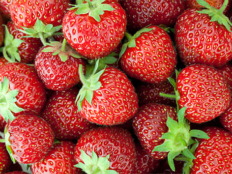 ostara erdbeeren vom